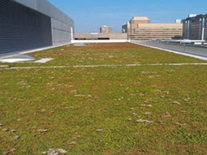 green roofing, live roof, living roof systems, living roof installation ohio